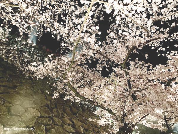 人と壁と桜