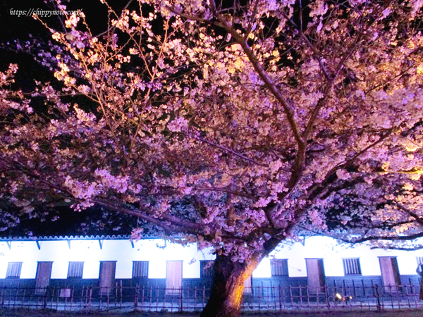 夜桜と櫓1