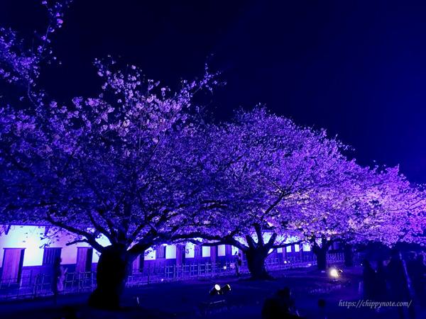 夜桜と櫓3