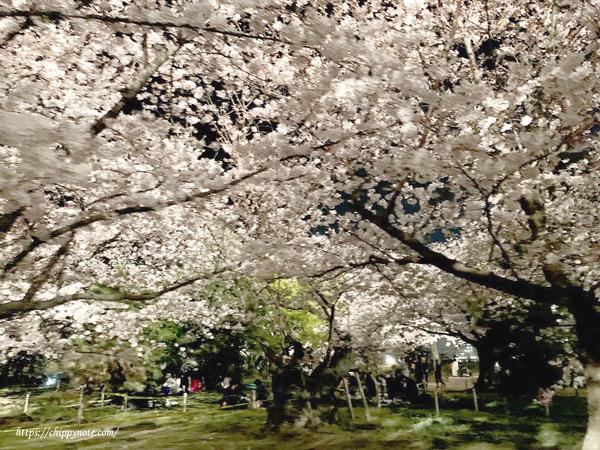 夜桜の天井
