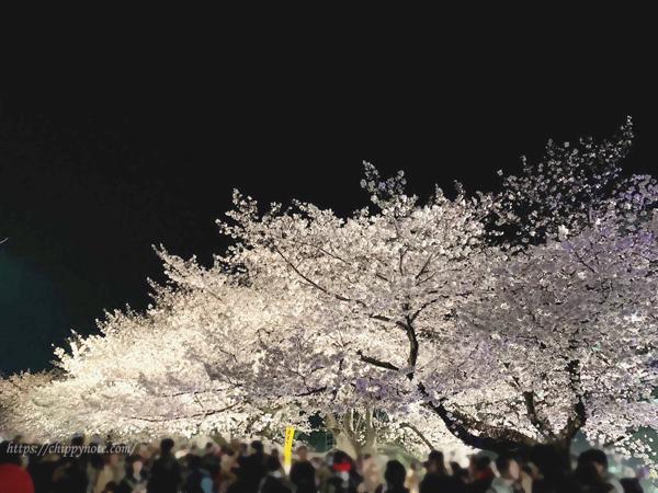 夜桜-桜並木