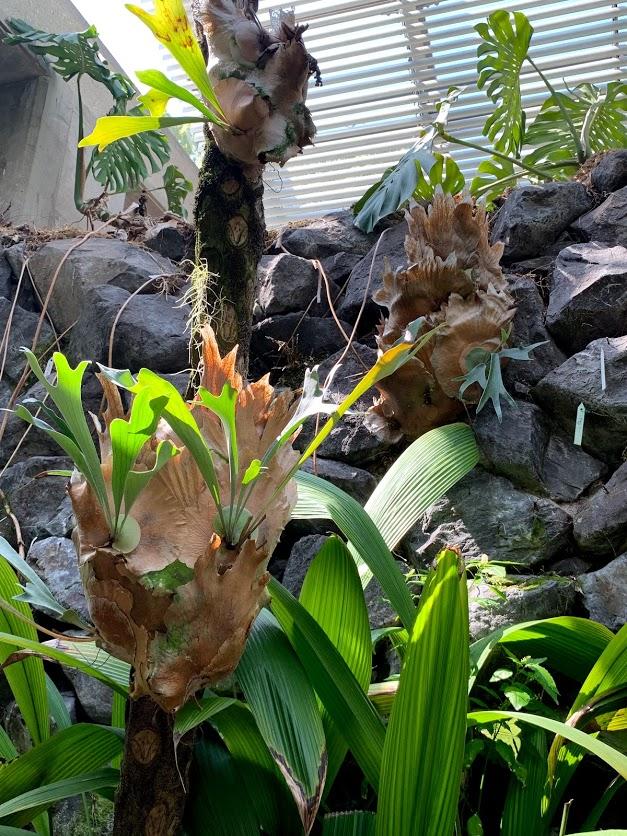顔みたいな植物