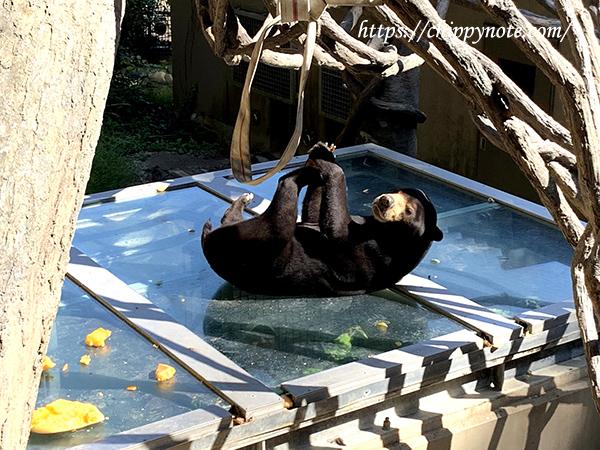 食事中のクマ