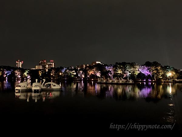 夜のスワンボートとライトアップ