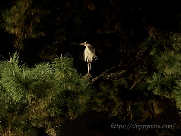 大濠公園・夜の鳥
