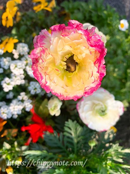 道端の春の花2