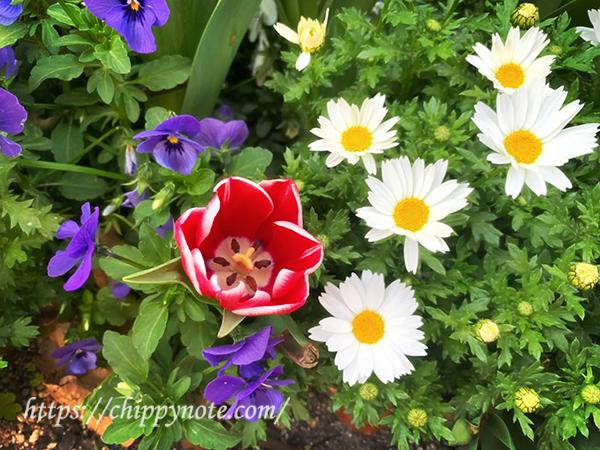 道端の春の花3