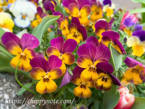 道端の春の花6