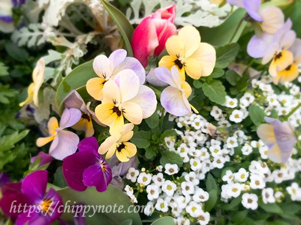 道端の春の花