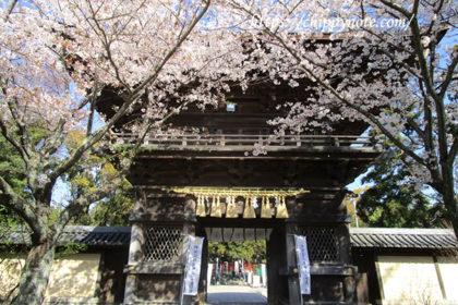 〈香椎宮参拝〉桜咲き乱れる、赤く美しい社-アイキャッチ