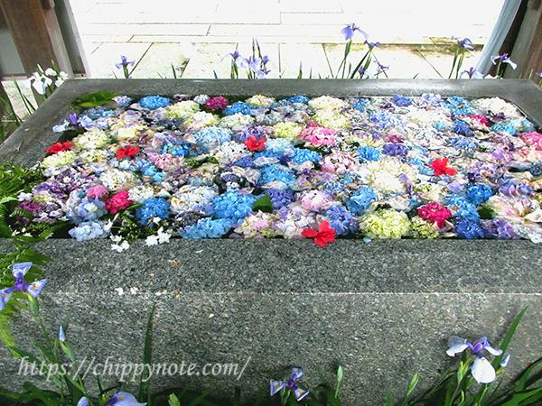花と手水舎・1