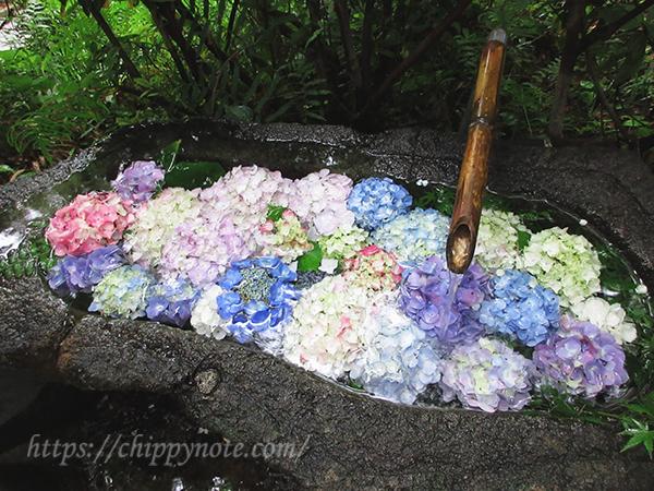 花と手水舎・2