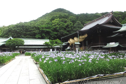 〈宮地嶽神社〉参拝・菖蒲祭り2020年-アイキャッチ
